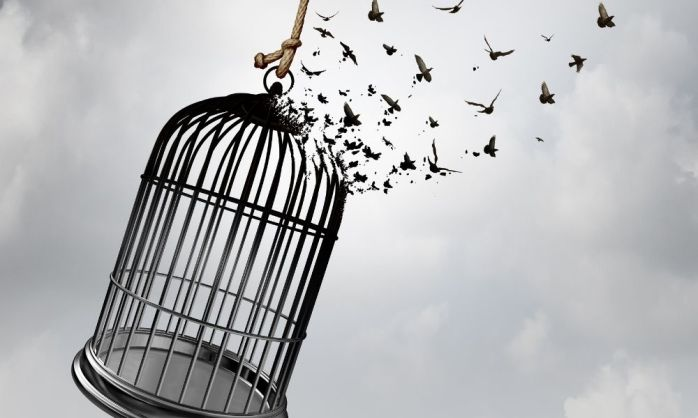 birds freed from cage